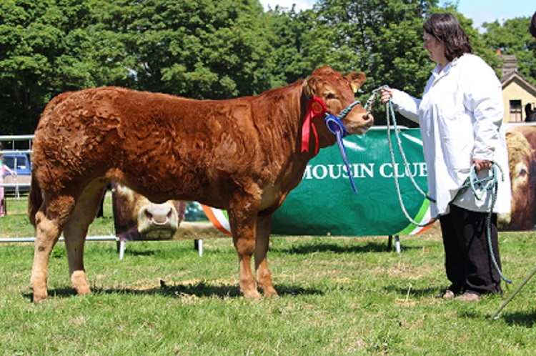 Roundhill Langel 1700 Et - Reserve Overall Champion at Charleville show 20