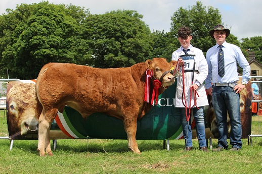 Ardnacrusha Lord Of The Rings Et - Male Champion Charleville show 2017
