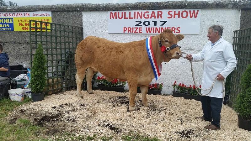 Mullingar Show 2017 Champion