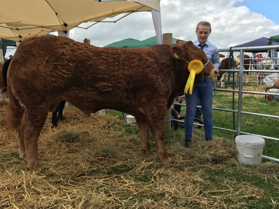Clastleblaney third Bull 2017